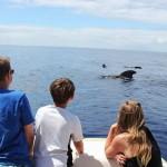 Встреча дельфинов